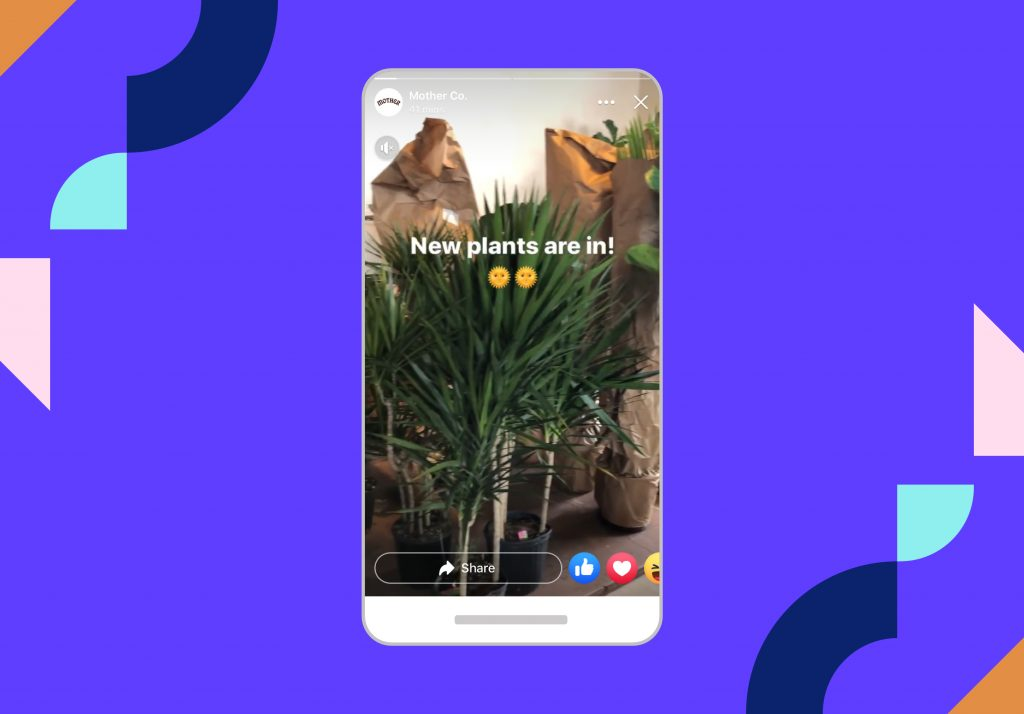 Iphone graphic showing Instagram story of a plant